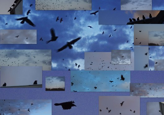 A Collage of Crows
