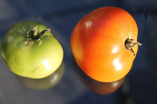 This is not a Post about Tomatoes